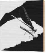 Damselfly In Black And White Wood Print