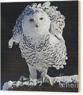 Dance Of Glory - Snowy Owl Wood Print