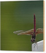 Dance Of The Dragonfly Wood Print