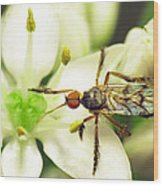 Dancefly On Onion Flower Wood Print by Walter Klockers