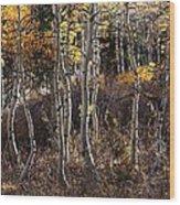 Dancing Aspens Wood Print