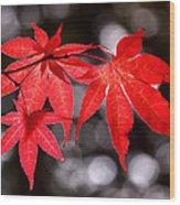 Dancing Japanese Maple Wood Print by Rona Black