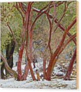 Dancing Manzanitas On The Hillside In Park Sierra-california Wood Print