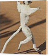 Dancing Sifaka 2 Wood Print