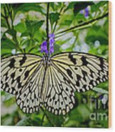 Dancing With Butterflies Wood Print