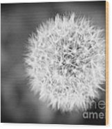 Dandelion 2 In Black And White Wood Print