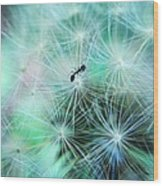 Dandelion Ant Wood Print by Candice Trimble