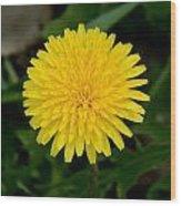 Dandelion Beauty Wood Print