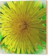 Dandelion Blossom Wood Print