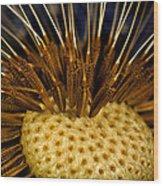 Dandelion Burst Wood Print