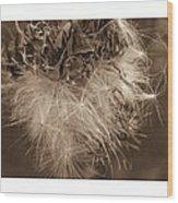 Dandelion Burst Sepia Wood Print