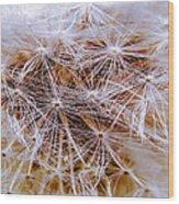 Dandelion Closeup Wood Print