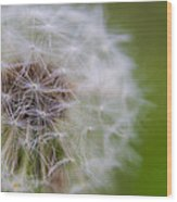 ...dandelion Wood Print
