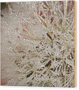 Dandelion Crystals Wood Print