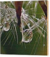 Dandelion Droplets Wood Print