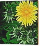 Dandelion Farm Wood Print