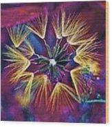 Dandelion Fireworks 003 Wood Print