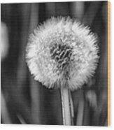 Dandelion Fluff Black And White Wood Print