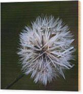 Dandelion In Green Wood Print