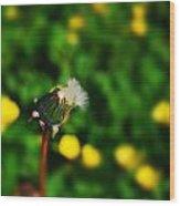 Dandelion In Spring Wood Print by John Magnet Bell