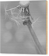 Dandelion Last To Fly Away Monochrome Wood Print