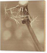 Dandelion Last To Fly Away Sepia Wood Print