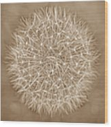 Dandelion Marco Abstract Brown Wood Print