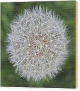 Dandelion Marco Abstract Wood Print