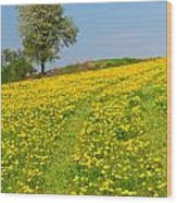 Dandelion Meadow And Alone Tree  Wood Print