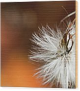 Dandelion Seed Head And Fall Color Background Wood Print