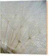 Dandelion Seed Head Macro II Wood Print