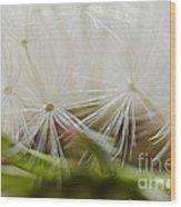 Dandelion Seed Head Macro IIi Wood Print
