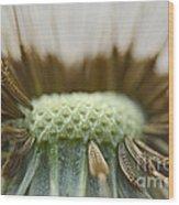 Dandelion Seed Macro Wood Print