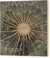 Dandelion Seed Pod Wood Print by Elery Oxford