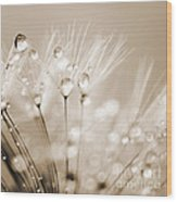 Dandelion Seed With Water Droplets In Sepia Wood Print by Natalie Kinnear
