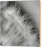 Dandelion Seeds - Black And White Wood Print