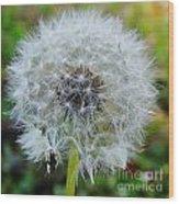 Dandelion Seed Puff Wood Print