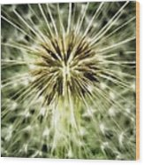 Dandelion Seeds Wood Print