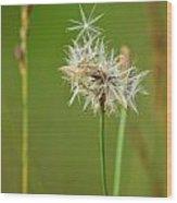 Dandelion Star Wood Print