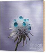 Dandelion Tears Wood Print