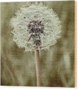 Dandelion Textures Wood Print