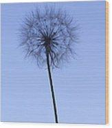 Dandelion  Wood Print by Tony Cordoza