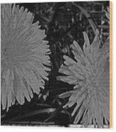 Dandelion Weeds? B/w Wood Print