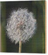 Dandelion With Abstract Grasses Wood Print