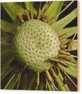 Dandelion With Seeds Wood Print