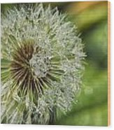 Dandelion With Water Drops Wood Print