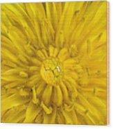 Dandelion With Waterdrop Wood Print