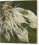 Dandelion's After Rain Wood Print