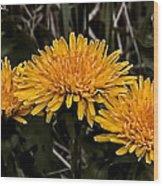 Dandelions In Group  By Leif Sohlman Wood Print