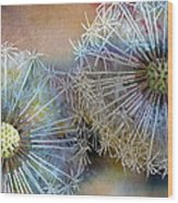 Dandelions Wood Print by John Christopher Bradley